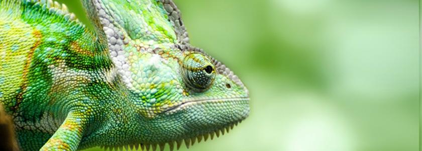 Augen der Tiere: die Meister des Sehens in der Tierwelt